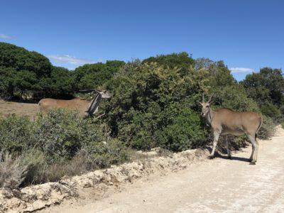 De Hoop Nature Reserve nabij Swellendam Zuid-Afrika