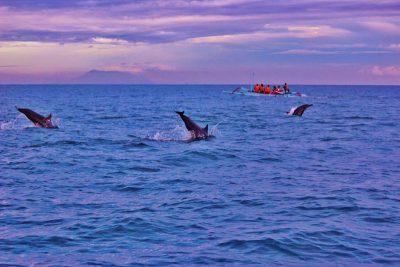 Dolfijnen spotten in Lovina Bali