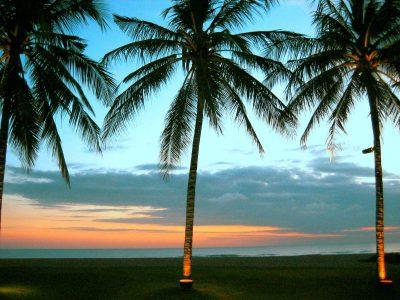 Palmbomen in Seminyak
