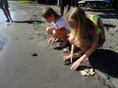 Kinderen laten schildpadjes vrij op het strand in Pemuteran