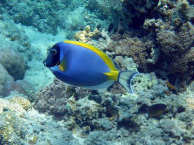 Vis tijdens snorkelen in Nusa Lembongan