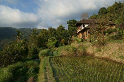 Uitzicht op de prachtige rijstvelden van Munduk