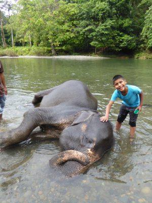 Kinderen wassen Olifanten in Sumatra
