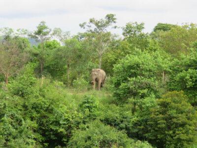 Olifanten spotten bij Pranburi, Thailand
