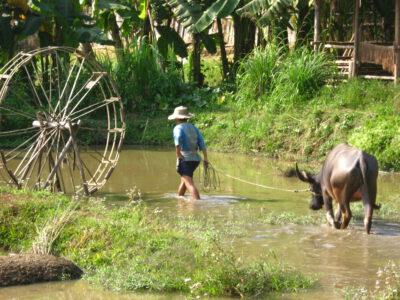 Boeren aan het werk op het rijstveld in Thailand
