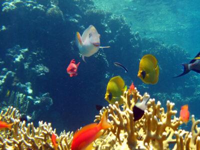 De mooie onderwaterwereld bij Koh Tao, Thailand